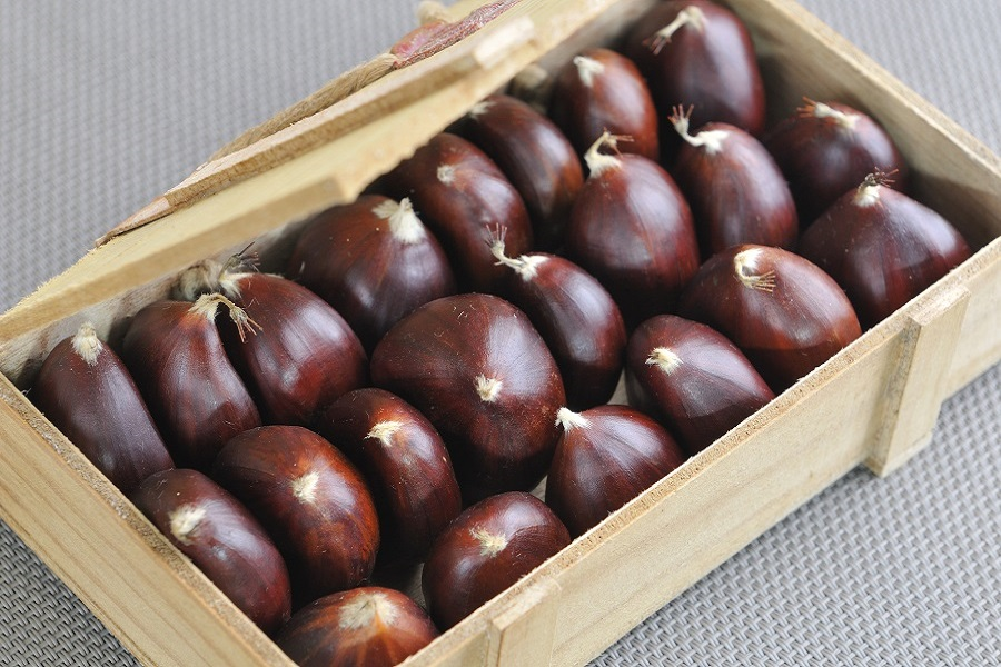 selection of chestnut, autumn fruit par excellence